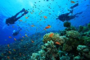 underwater activity
